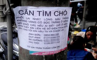 tim-cho-lac_1364468335